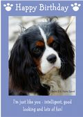 "Cavalier King Charles Spaniel-Happy Birthday - ""I'm Just Like You"" Theme"